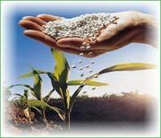 Карбамид,  селитра (минеральные удобрения) - возможен экспорт.